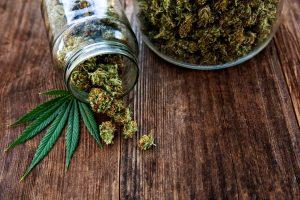 Cannabis Insurance Services